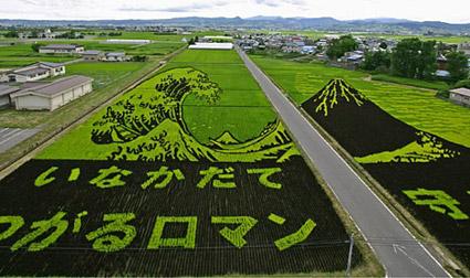 rice_art1425.jpg